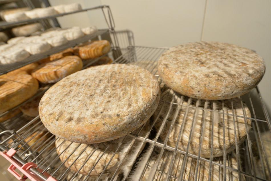 Dans la cave d'affinage, les fromages se cotoient et se transforment, surveillés par le maître affineur.