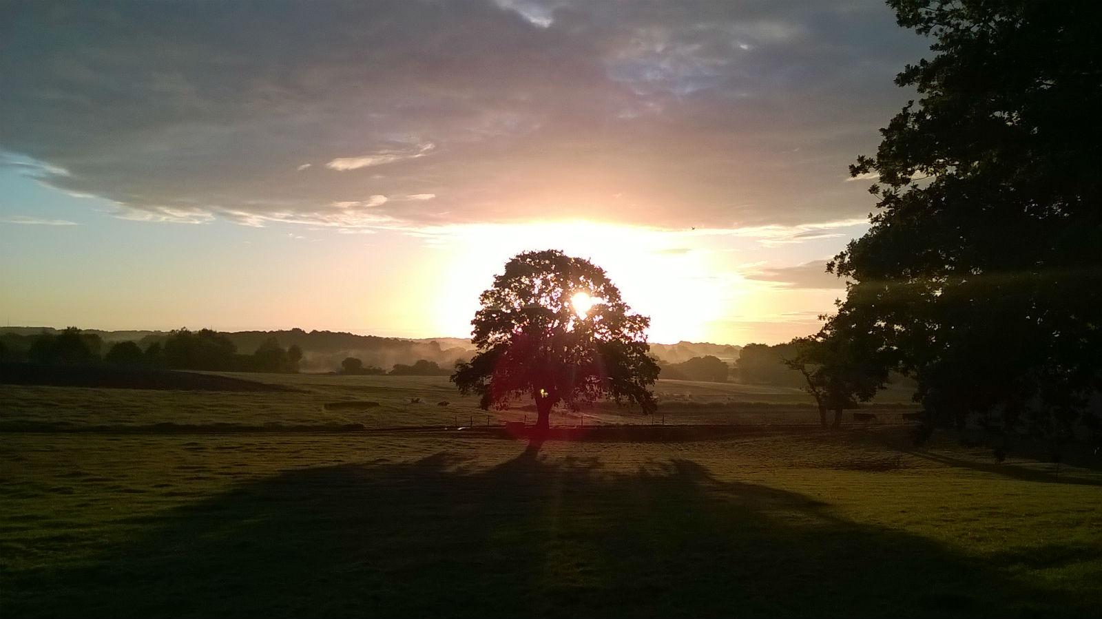 Le grand arbre de la ferme.