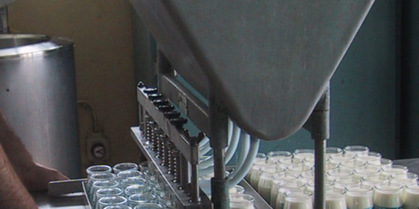 Fabrication artisanale des yaourts à Baden