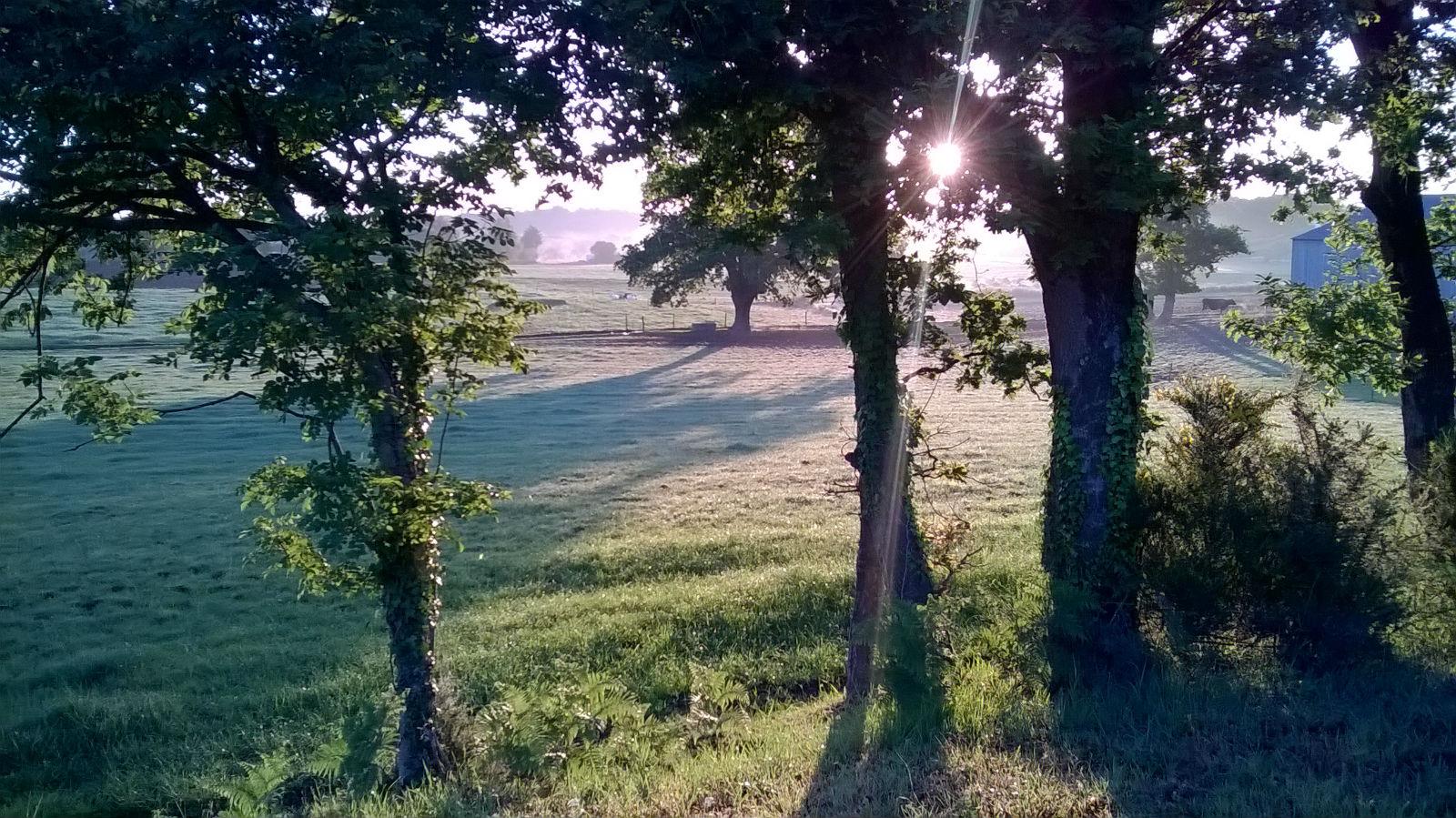 Le soleil se lève sur le champs des vaches.